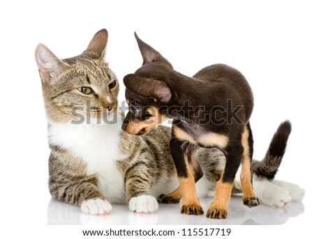 the puppy looks in the face to a cat. isolated on white background - stock photo