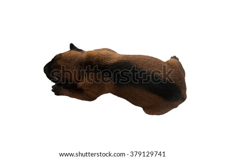 the puppy on the white background - stock photo