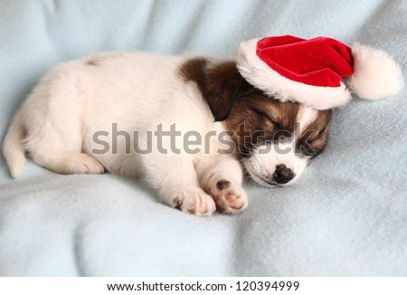 the puppy sleeps in a New Year's cap - stock photo