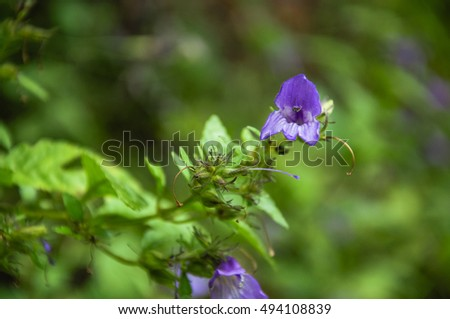 The purple flowers closeup with green background