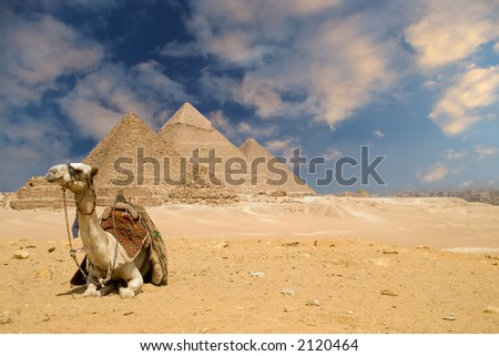 The Pyramids Animal - stock photo