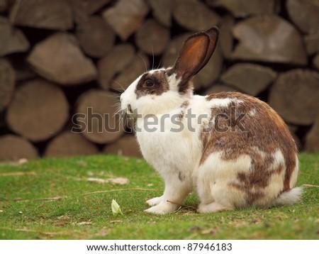 The rabbit - stock photo