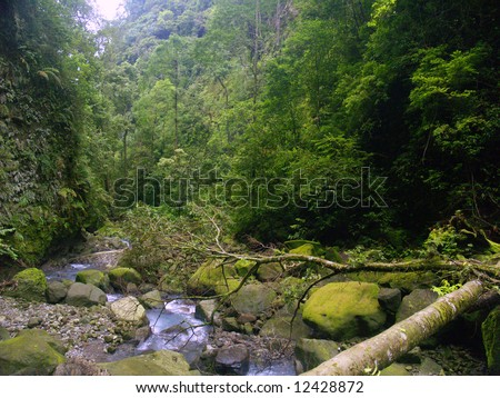 the rain forest in sibolangit camping ground , Karo, North Sumatera, Sumatra Island, Indonesia - stock photo