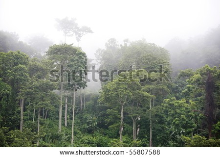 The raw energy of ancient rainforest in Malaysia. - stock photo