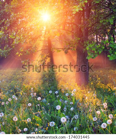 The rays of dawn sunlight illuminate the clearing with wildflowers and dandelions - stock photo