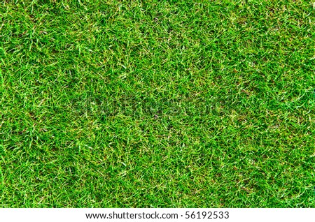 The real green grass background - stock photo