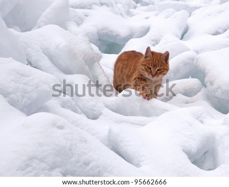 The red cat goes on snowdrifts - stock photo