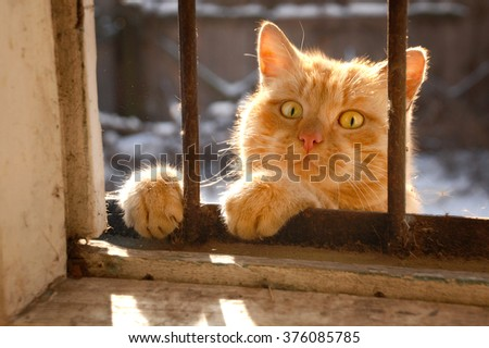 The red cat looks to the house through a window - stock photo