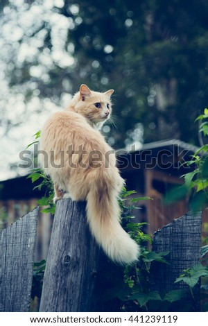 The red cat on the fence. - stock photo