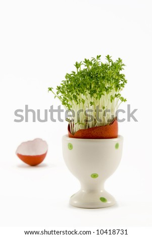 the red egg in egg-cup with growing cress - stock photo