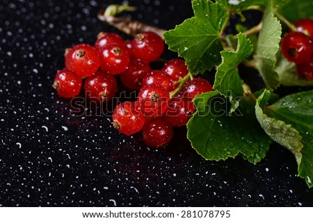 The red fresh currant close up. Macro - stock photo