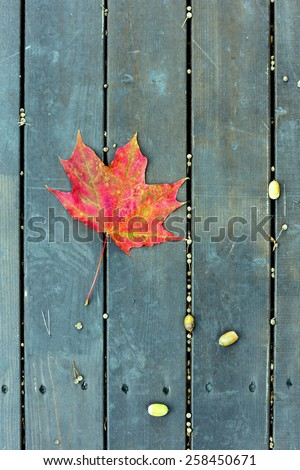 The red maple leaf and acorns on a green bench in the park in autumn - stock photo