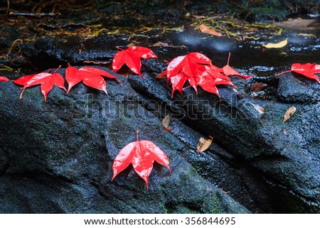 The red maples leaves and beautiful waterfall - stock photo