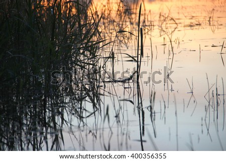 The reed in the evening. Tranquil scene. Grass reflected in the river - stock photo