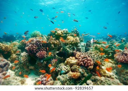 The reef - underwater fishes and corals swimming around - stock photo