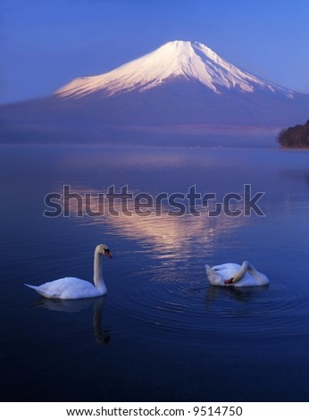 The reflection of Mt. Fuji on a lake and swans love talking - stock photo