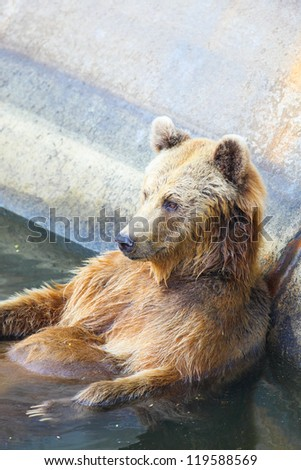 The relaxing bear in the water - stock photo