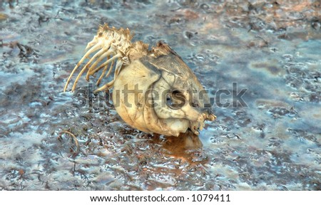 The remains of a large fish on an oily coastline - stock photo