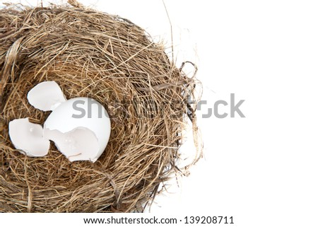 The remains of an egg, broken open and empty, lay in a nest on white. - stock photo
