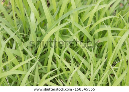 The revenue of the green grass. From low to the ground. If there is a lot of grasslands. Look naturally beautiful. - stock photo