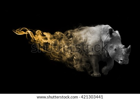 The rhinoceros is one of the big five animals you must see in africa, animal kingdom collection, African wildlife - stock photo