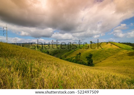 The rice field on mountain in Khao Kho Phetchabun Thailand