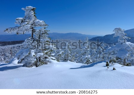 The rime on trees and a panorama - stock photo