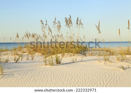 The Rippled White Sand Dunes and Sea Oats on a Beautiful Florida Beach as the Sun Comes Up - stock photo