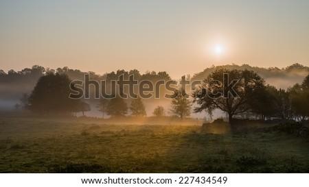 The rising sun burns through fog shrouding the trees around a lake - stock photo