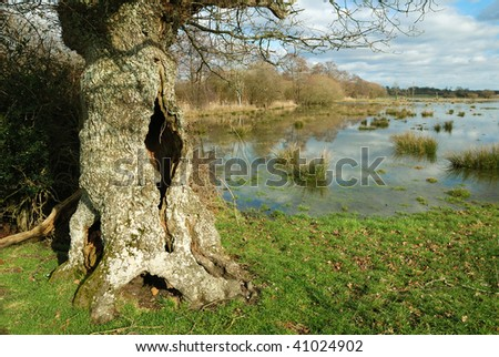 The River Avon, near Christchurch in Dorset, in flood during the winter months. - stock photo
