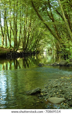 The  river Camel  courses through a tunnel of green trees in summer time in Cornwall England - stock photo