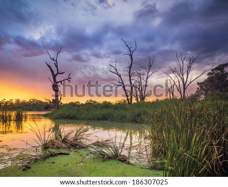 The River Murray in South Australia - stock photo