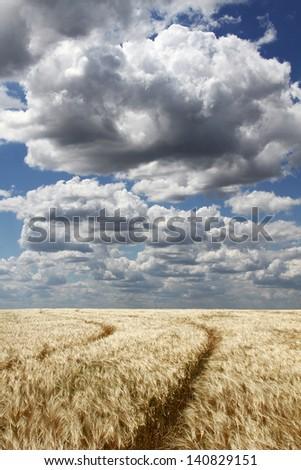 The road in a wheat field under cumulonimbus clouds - stock photo