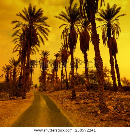 The road in desert oasis at sunset - stock photo