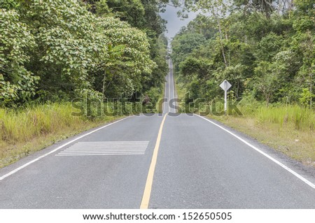the road in middle forest - stock photo