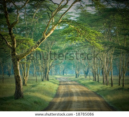 the road in mysterious forest - stock photo
