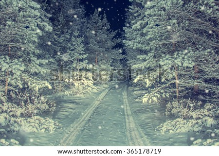 The road in night snowy forest. Winter background. - stock photo
