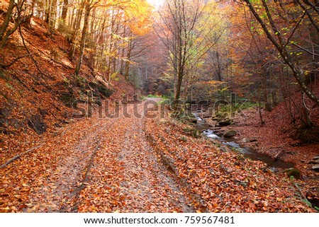 The road in the autumn beech forest
