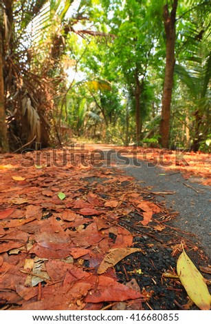 The road in the fall during the day - stock photo