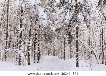 The road in wood in snow in winter day - stock photo