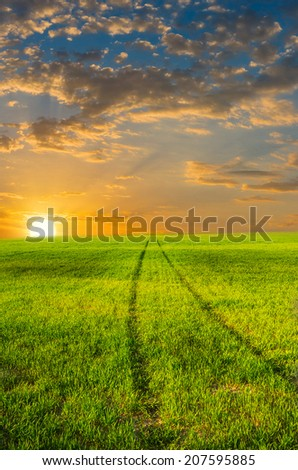 The road leads into a green wheat field in sunset - stock photo