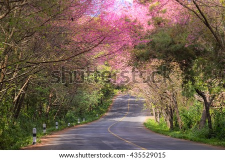 The road that covered by the pink flower