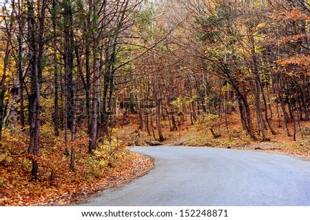 The road through the autumnal forest - stock photo
