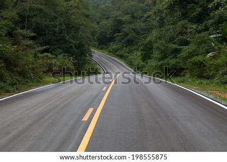 The road through the rainforest. - stock photo