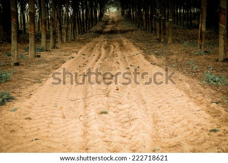 The road through the rubber farm after rain.