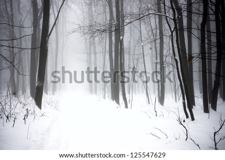 the road through the winter foggy forest - stock photo