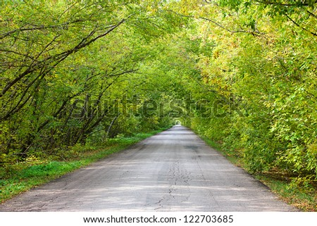 the road through the wood - stock photo