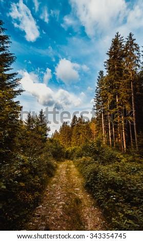 The road through the wood, Carpathians - stock photo