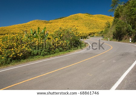 the road to yellow flower mountain at Mae Hong Son province Thailand