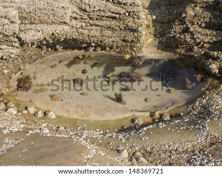 the rock pool - stock photo